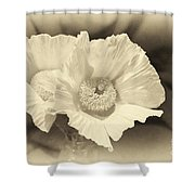 Soft Sepia White Poppy Matilija Flower Shower Curtain