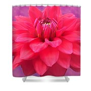Softer Summer Dahlia Shower Curtain