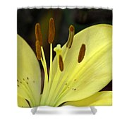 Softly Golden Shower Curtain
