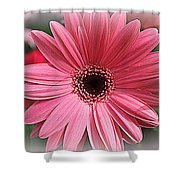 Softly In Pink - Zinnia Shower Curtain