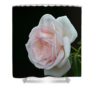 Softly Pink - Rose Shower Curtain