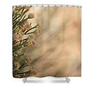 Softness In The Desert Shower Curtain