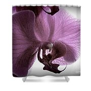 Softness Shower Curtain