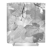 Softness Of Maple Leaves Monochrome Shower Curtain