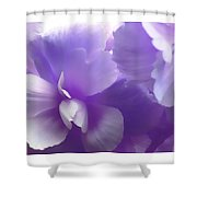 Softness Of Purple Begonias Shower Curtain