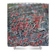 Soldiers At Attention Shower Curtain