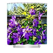 Solina Clematis On Fence Shower Curtain