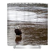 Solitary Eagle Shower Curtain