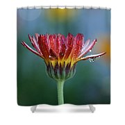 Solitary Moment Shower Curtain