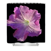 Solitary Pink Petunia Shower Curtain
