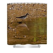 Solitary Sandpiper Shower Curtain