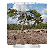 Solitary Tree Amidst Field Of Boulders Shower Curtain