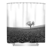 Solitary Tree In Winter. Auvergne. France Shower Curtain