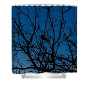 Solitude In The Midst Of Chaos Shower Curtain