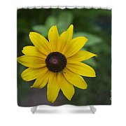 Solo Black-eye Susan Shower Curtain