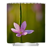Solo Crocus Shower Curtain