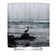 Solo Pelican Shower Curtain
