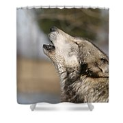 Solo Song Shower Curtain