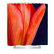 Solo Tulip Shower Curtain