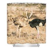 Somali Ostriches Kissing Shower Curtain
