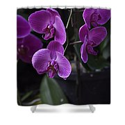 Some Very Beautiful Purple Colored Orchid Flowers Inside The Jurong Bird Park Shower Curtain