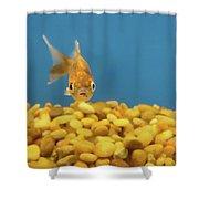 Something Fishy Shower Curtain by Donna Blackhall