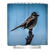 Song Sparrow On Top Of Branch Shower Curtain