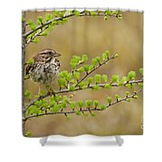 Song Sparrow Pictures 111 Shower Curtain