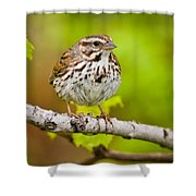 Song Sparrow Pictures 132 Shower Curtain