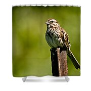 Song Sparrow Pictures 135 Shower Curtain