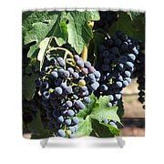 Sonoma Vineyards In The Sonoma California Wine Country 5d24630 Vertical Shower Curtain