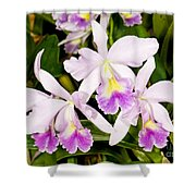 Sophronitis Orchid Shower Curtain