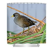 Sora Rail Shower Curtain