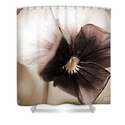 Sorbet Viola Shower Curtain