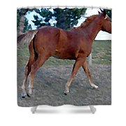 Sorrel Yearling Shower Curtain