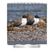 Mr. And Mrs. Laughing Gull  Shower Curtain