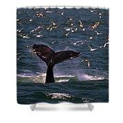 Sounding Humpback Shower Curtain