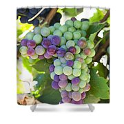 South Africa, Scenes At Constantia Shower Curtain