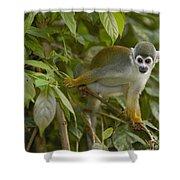 South American Squirrel Monkey Amazonia Shower Curtain