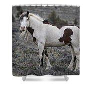 South Steens Wild Stallion Shower Curtain