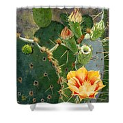 South Texas Prickly Pear Shower Curtain