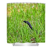 Southern Black Racer Shower Curtain by Al Powell Photography USA