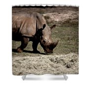 Southern Black Rhino Shower Curtain