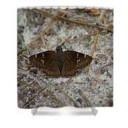 Southern Cloudywing Shower Curtain