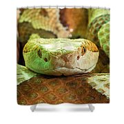 Southern Copperhead Shower Curtain
