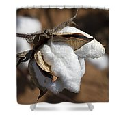 Southern Cotton Shower Curtain