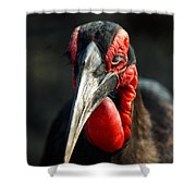 Southern Ground Hornbill Portrait Front View Shower Curtain