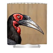 Southern Ground Hornbill Portrait Side View Shower Curtain by Johan Swanepoel