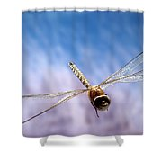 Southern Hawker Dragonfly  Shower Curtain
