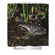 Southern Leopard Frog Shower Curtain